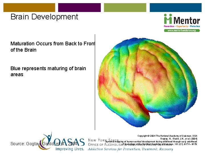 Brain Development Maturation Occurs from Back to Front of the Brain Blue represents maturing