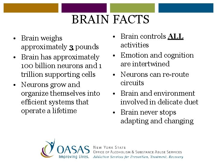 BRAIN FACTS • Brain weighs approximately 3 pounds • Brain has approximately 100 billion