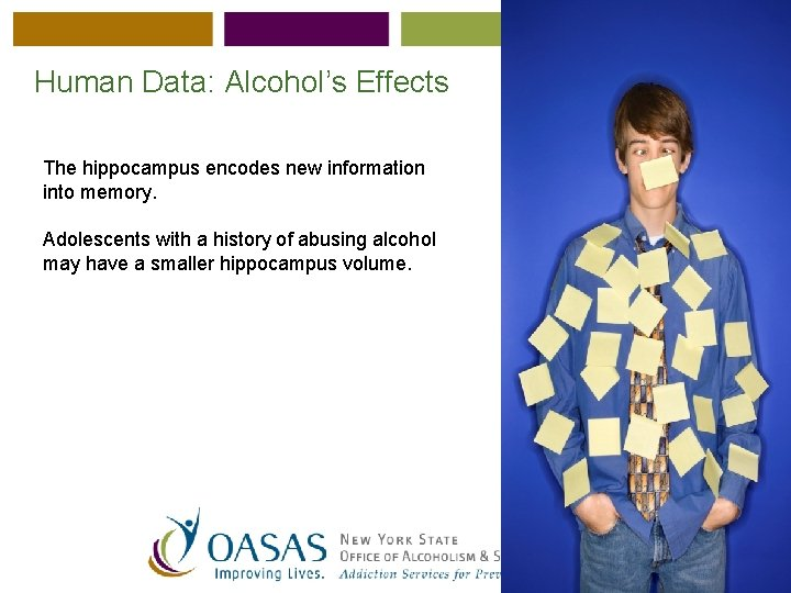 Human Data: Alcohol's Effects The hippocampus encodes new information into memory. Adolescents with a