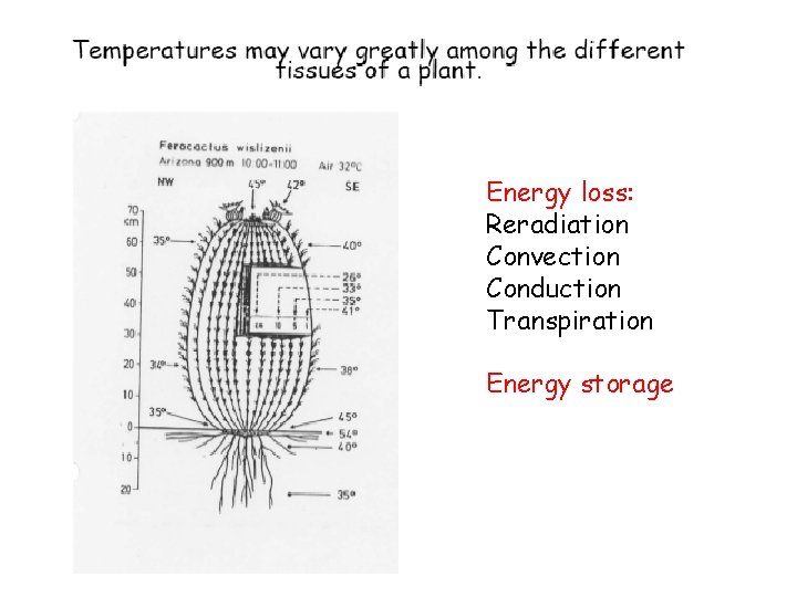 Energy loss: Reradiation Convection Conduction Transpiration Energy storage