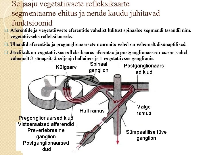 Seljaaju vegetatiivsete refleksikaarte segmentaarne ehitus ja nende kaudu juhitavad funktsioonid Aferentide ja vegetatiivsete eferentide