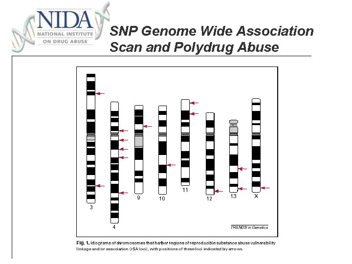 SNP Genome Wide Association Scan and Polydrug Abuse