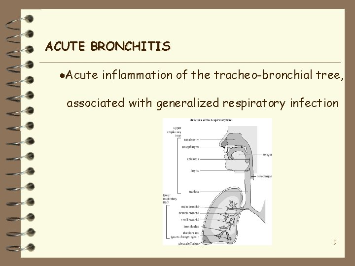 ACUTE BRONCHITIS ·Acute inflammation of the tracheo-bronchial tree, associated with generalized respiratory infection 9