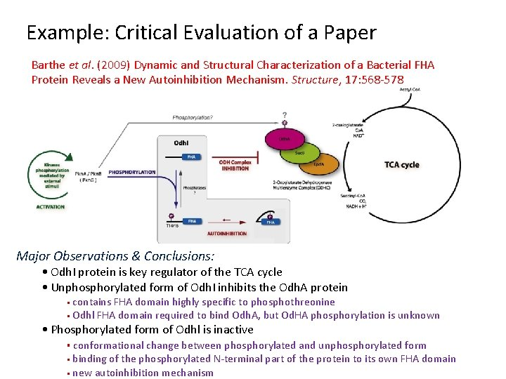 Example: Critical Evaluation of a Paper Barthe et al. (2009) Dynamic and Structural Characterization