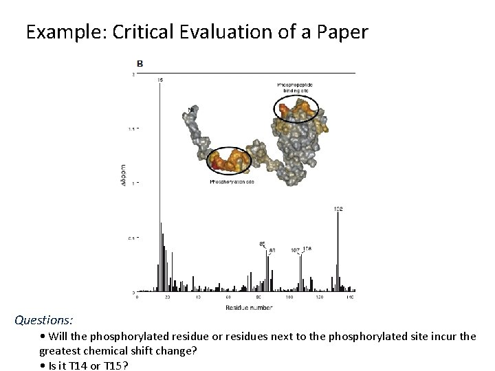 Example: Critical Evaluation of a Paper Questions: • Will the phosphorylated residue or residues