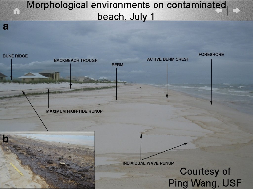 Morphological environments on contaminated beach, July 1 Courtesy of Ping Wang, USF