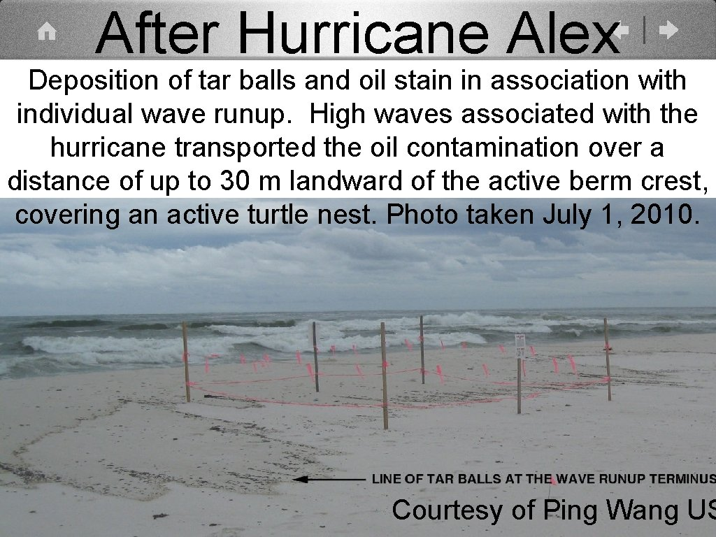 After Hurricane Alex Deposition of tar balls and oil stain in association with individual