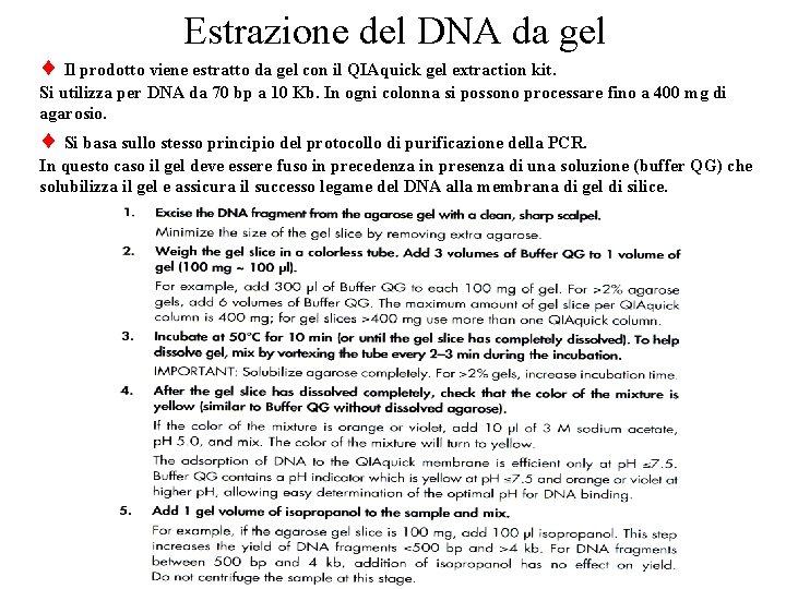 Estrazione del DNA da gel Il prodotto viene estratto da gel con il QIAquick