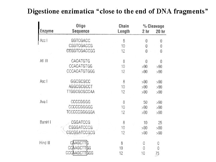 """Digestione enzimatica """"close to the end of DNA fragments"""""""