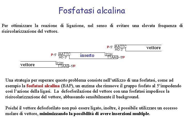 Fosfatasi alcalina Per ottimizzare la reazione di ligazione, nel senso di evitare una elevata