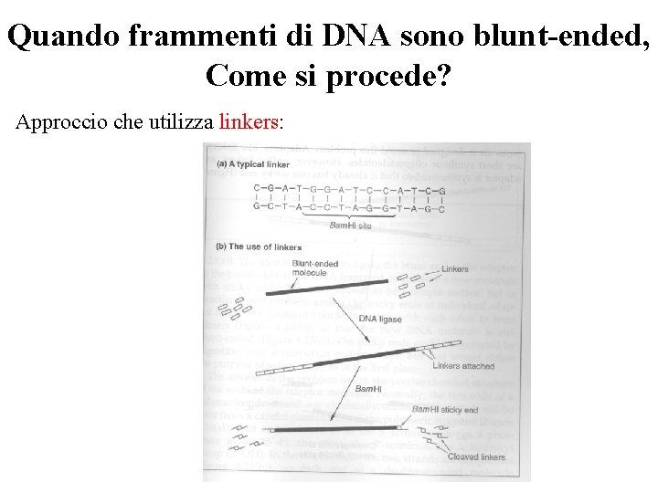 Quando frammenti di DNA sono blunt-ended, Come si procede? Approccio che utilizza linkers: