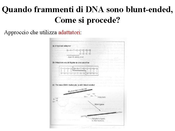 Quando frammenti di DNA sono blunt-ended, Come si procede? Approccio che utilizza adattatori: