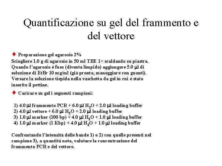 Quantificazione su gel del frammento e del vettore Preparazione gel agarosio 2% Sciogliere 1.