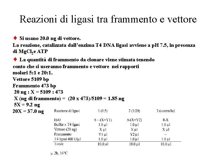 Reazioni di ligasi tra frammento e vettore Si usano 20. 0 ng di vettore.