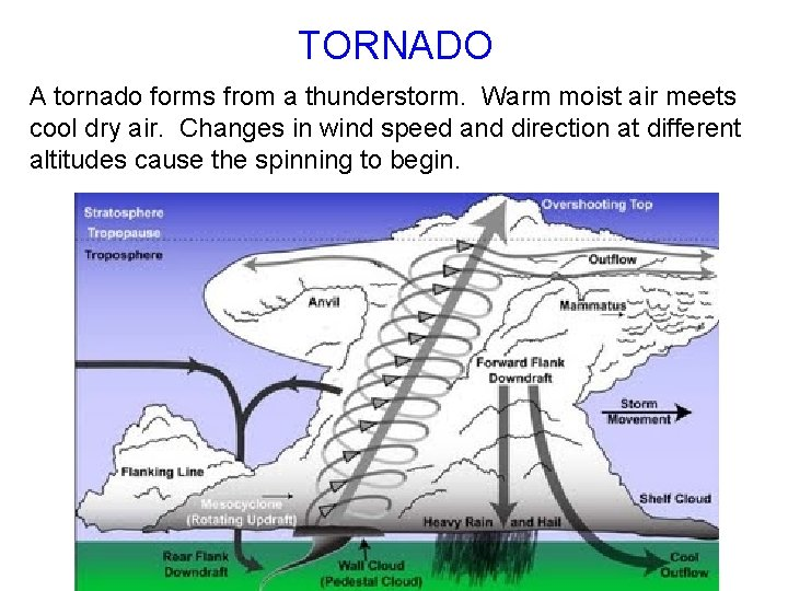 TORNADO A tornado forms from a thunderstorm. Warm moist air meets cool dry air.