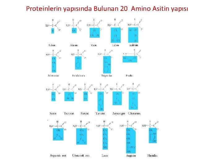 Proteinlerin yapısında Bulunan 20 Amino Asitin yapısı