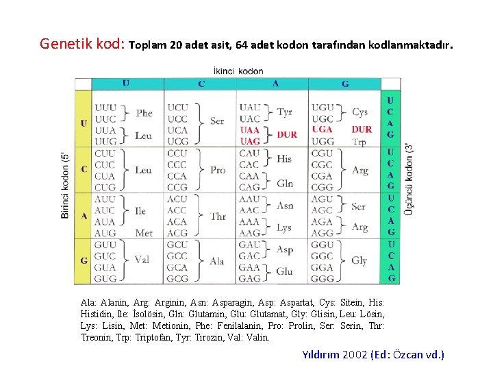Genetik kod: Toplam 20 adet asit, 64 adet kodon tarafından kodlanmaktadır. Ala: Alanin, Arg: