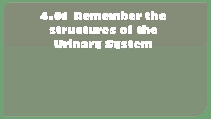 4. 01 Remember the structures of the Urinary System