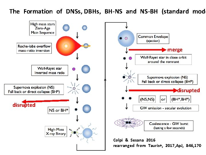 The Formation of DNSs, DBHs, BH-NS and NS-BH (standard mode merge disrupted Colpi &