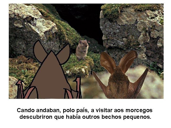 Cando andaban, polo país, a visitar aos morcegos descubriron que había outros bechos pequenos.