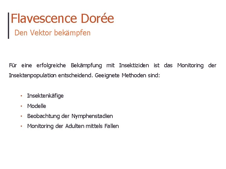 Flavescence Dorée Den Vektor bekämpfen Für eine erfolgreiche Bekämpfung mit Insektiziden ist das Monitoring