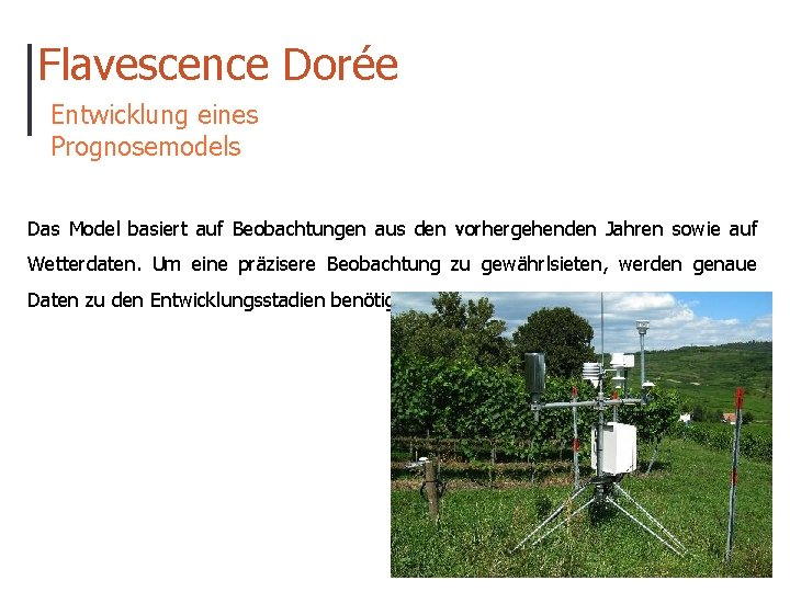Flavescence Dorée Entwicklung eines Prognosemodels Das Model basiert auf Beobachtungen aus den vorhergehenden Jahren