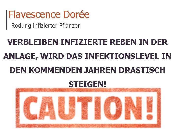 Flavescence Dorée Rodung infizierter Pflanzen VERBLEIBEN INFIZIERTE REBEN IN DER ANLAGE, WIRD DAS INFEKTIONSLEVEL