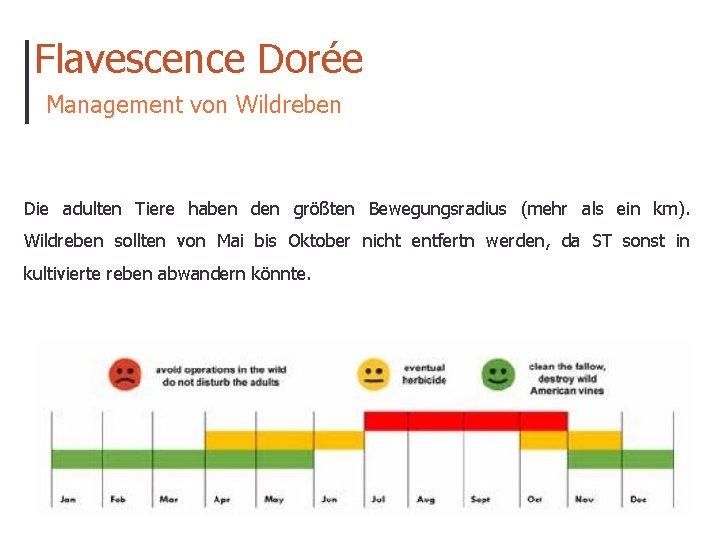 Flavescence Dorée Management von Wildreben Die adulten Tiere haben den größten Bewegungsradius (mehr als