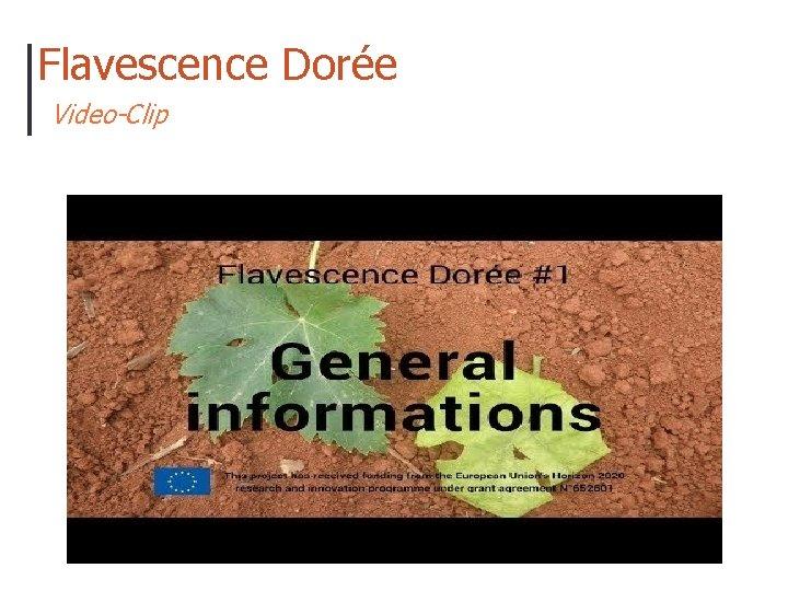 Flavescence Dorée Video-Clip