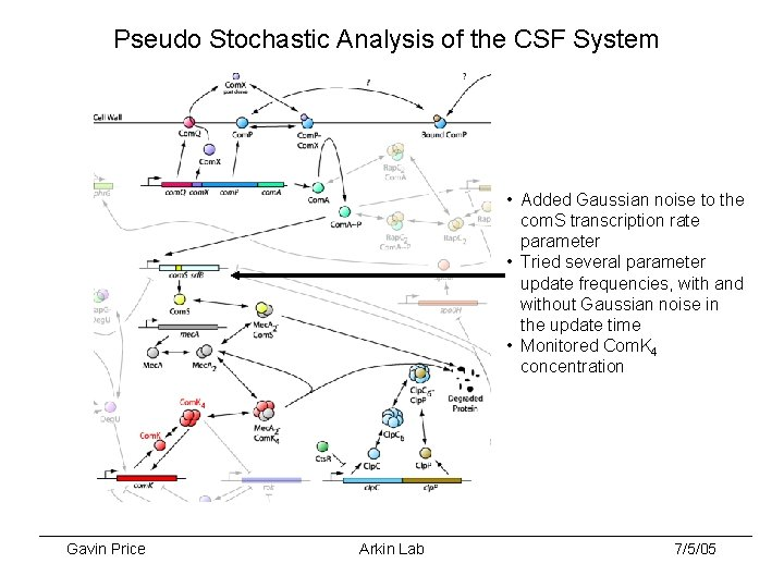 Pseudo Stochastic Analysis of the CSF System • Added Gaussian noise to the com.