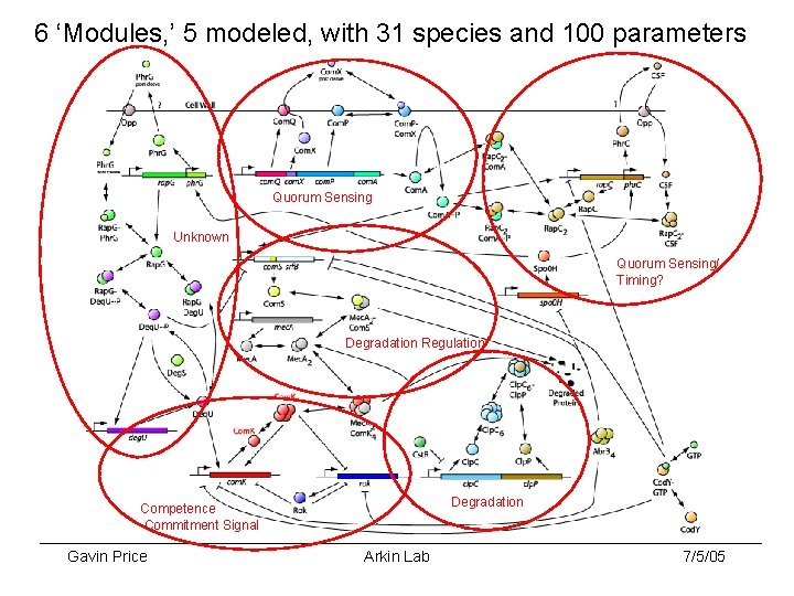 6 'Modules, ' 5 modeled, with 31 species and 100 parameters Quorum Sensing Unknown