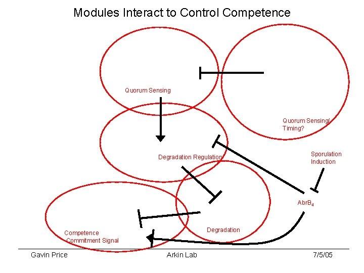 Modules Interact to Control Competence Quorum Sensing/ Timing? Degradation Regulation Sporulation Induction Abr. B