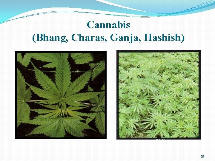 Cannabis (Bhang, Charas, Ganja, Hashish) 35