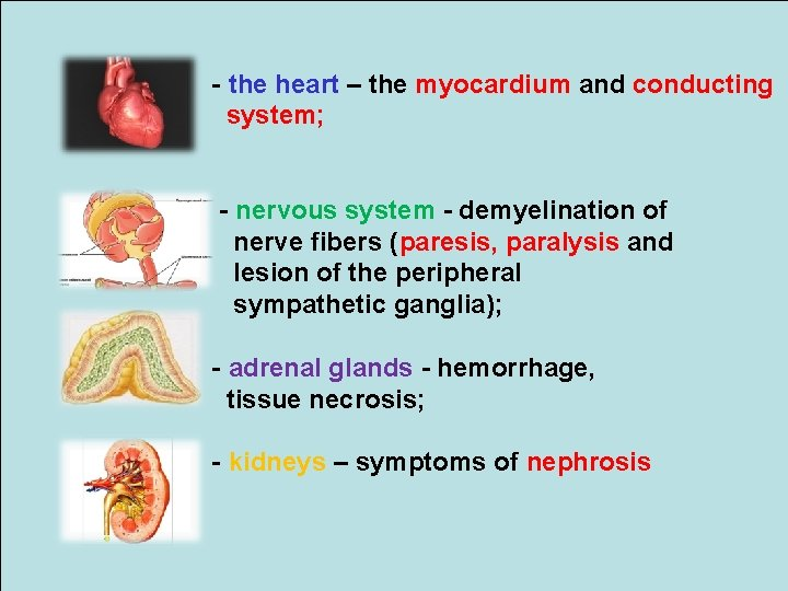 - the heart – the myocardium and conducting system; - nervous system - demyelination
