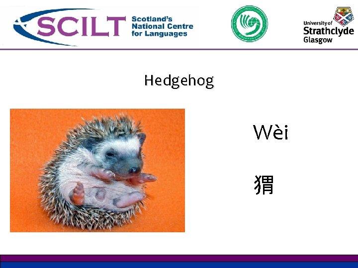 Hedgehog Wѐi 猬