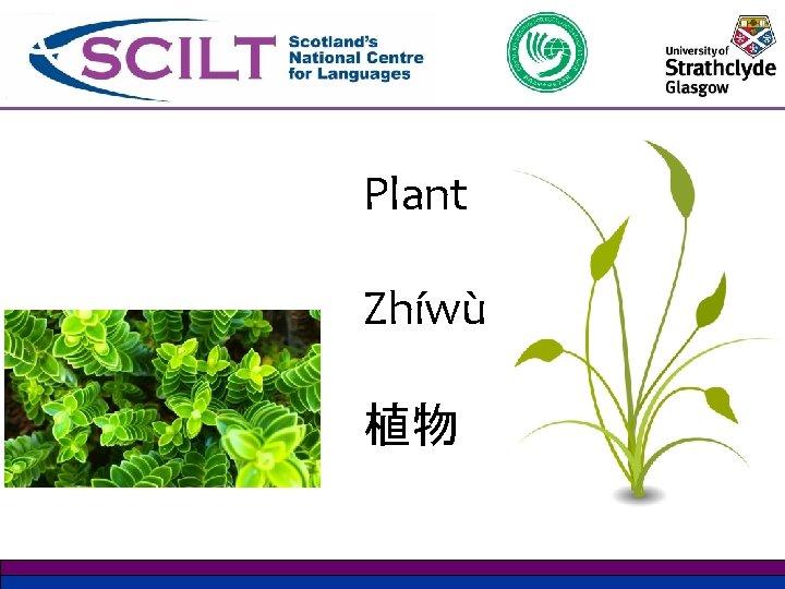 Plant Zhíwù 植物