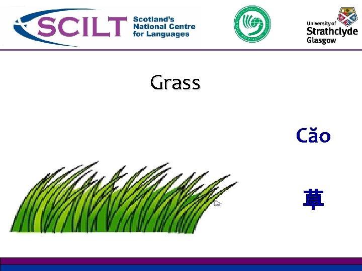 Grass Căo 草