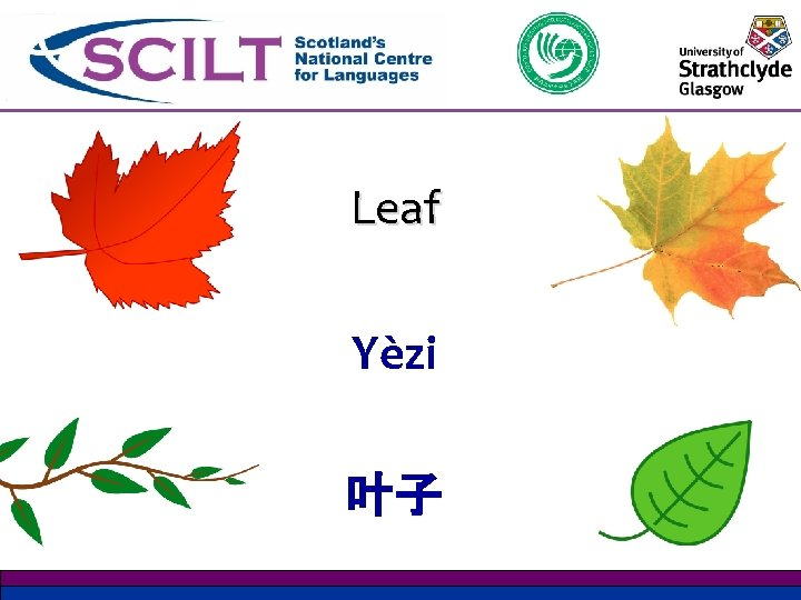 Leaf Yѐzi 叶子