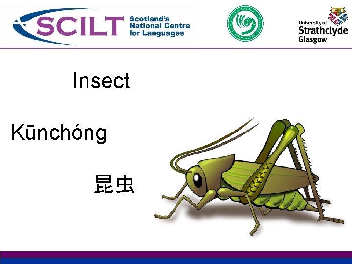 Insect Kūnchóng 昆虫