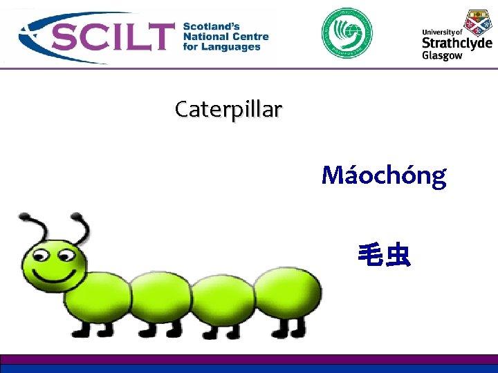 Caterpillar Máochóng 毛虫