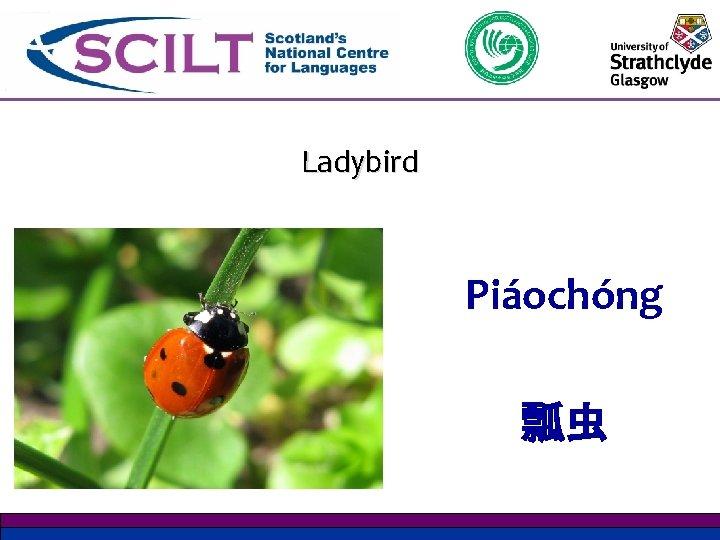 Ladybird Piáochóng 瓢虫