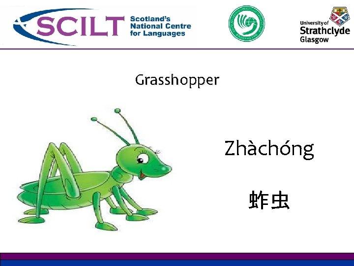 Grasshopper Zhàchóng 蚱虫
