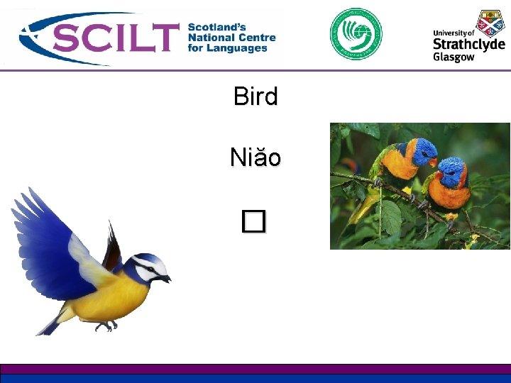 Bird Niăo �