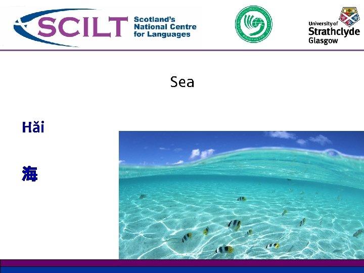 Sea Hăi 海