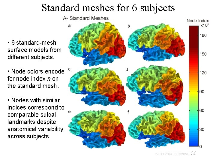 Standard meshes for 6 subjects • 6 standard-mesh surface models from different subjects. •