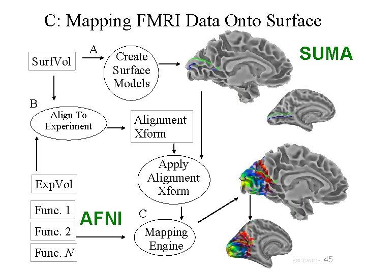 C: Mapping FMRI Data Onto Surface Surf. Vol B A Create Surface Models Align