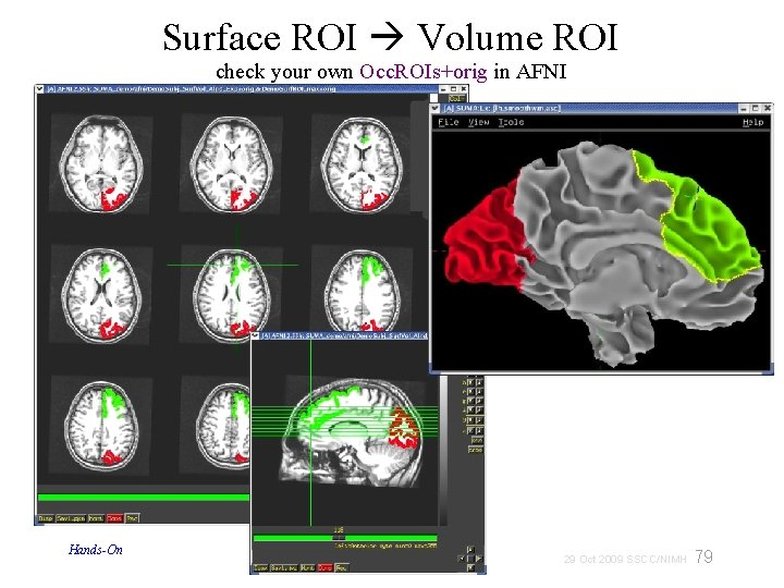 Surface ROI Volume ROI check your own Occ. ROIs+orig in AFNI Hands-On 79 29