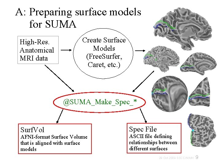 A: Preparing surface models for SUMA High-Res. Anatomical MRI data Create Surface Models (Free.