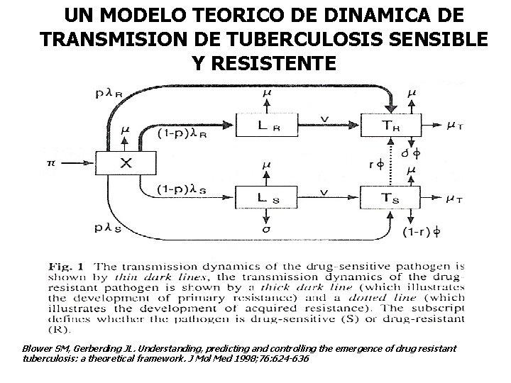 UN MODELO TEORICO DE DINAMICA DE TRANSMISION DE TUBERCULOSIS SENSIBLE Y RESISTENTE Blower SM,