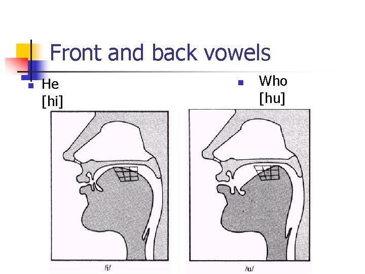 Front and back vowels n He [hi] n Who [hu]